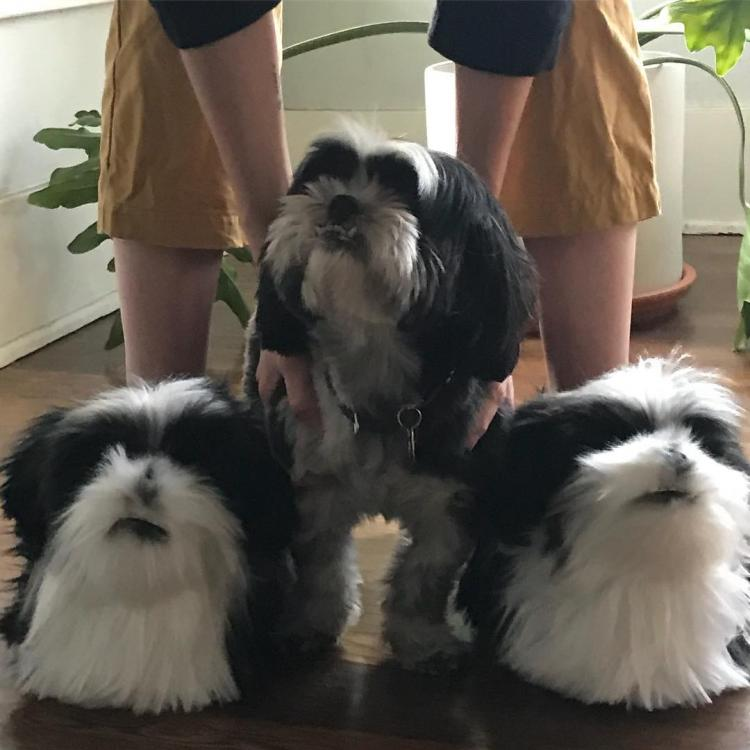 Custom Pet Slippers